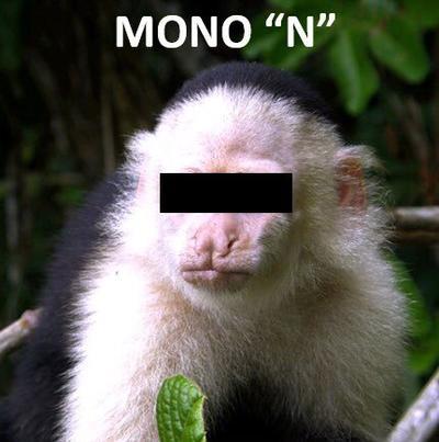 Luego de que Rafael Pacchiano, titular de la Secretaría de Medio Ambiente y Recursos Naturales (Semarnat) informara sobre la captura de un mono capuchino que generó un operativo que duró 14 días en Ciudad de México, las redes estallaron en memes.