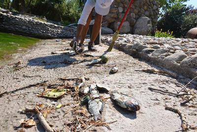 Encargados de la supervisión del lugar informaron que en la mañana de este domingo ya se llevaron una parte de los animales muertos.