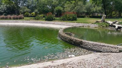 Los restos flotan entre las aguas verdosas y pestilentes.