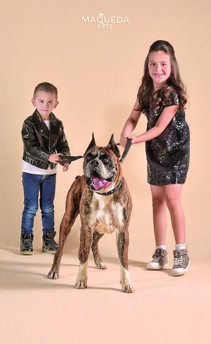 27052018 Miguel y Regina junto a Baxter, perro de raza bóxer. - Maqueda Pets