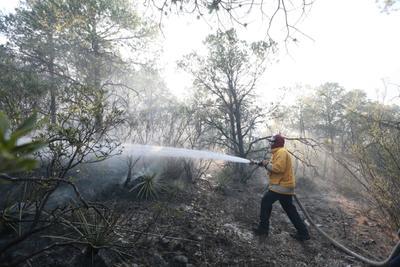Resultaron afectadas alrededor de 600 hectáreas.