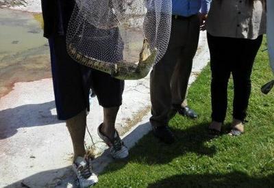 Cabe señalar que no es natural ver a un ejemplar de esta especie en un cuerpo de agua en la ciudad capital del estado de Coahuila, aledaño a una zona urbana.