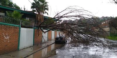 También se presentó caída de árboles.