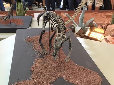 En la exposición se pueden apreciar fósiles.
