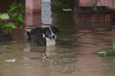 Emergencia en La Laguna por lluvias