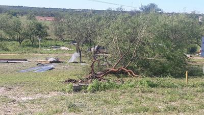 Algunos árboles se vinieron abajo.