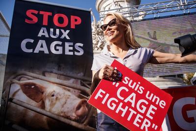 Si la iniciativa consigue sumar un millón de firmas en un año en al menos siete países de la UE, la Comisión Europea deberá posicionarse oficialmente acerca de este modo de crianza, del cual las organizaciones denuncian sistemáticamente su crueldad.