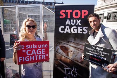 """La campaña """"Por una nueva era sin jaulas"""" denuncia que 370 millones de animales en Europa, 90 millones de ellos en Francia, son criados en jaulas, según cifras de la organización animalista CIWF."""