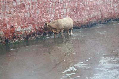 El Arenal y los poblados cercanos a la zona son los que presentan más riesgo de afectación en las próximas horas, debido a la afluencia de los desfogues de las presas Guadalupe Victoria y Bayacora.