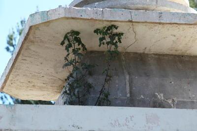Es tal la falta de mantenimiento, que la parte alta de la fuente es hoy espacio para que la vegetación se extienda.