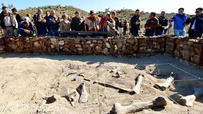 Aquí han descubierto hadrosaurios, ceratópidos, tiranosaúridos, dromaeosaúridos y ornimímidos; y restos parciales del Velafrons coahuilensis, un dinosaurio pico de pato con cresta.