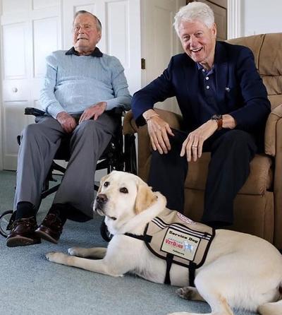 Por su parte el mismo Sully tiene su propia cuenta de Instagram, en donde pueden encontrarse imágenes de su labor como perro de asistencia. Entre los comandos que sabe obedecer están abrir puertas o alcanzar el teléfono.