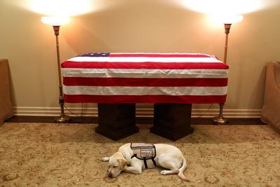 La imagen de este labrador de nombre Sully, echado junto al féretro de su dueño, el expresidente de Estados Unidos George HW Bush, es una escena conmovedora que se ha vuelto viral.