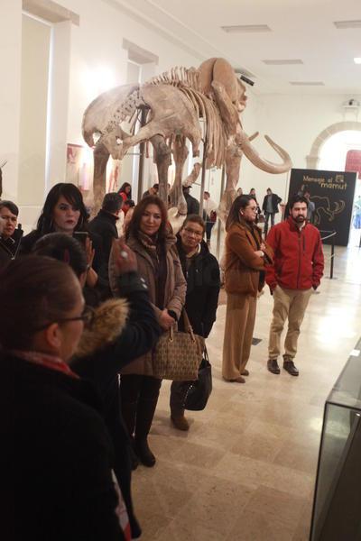La exhibición del esqueleto de mamut estará hasta el mes de marzo en el CCB en horario de 10 de la mañana hasta las 17 horas de martes a domingo.