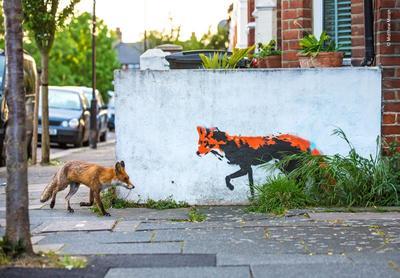 Fotografía de un zorro y un grafiti del mismo en la ciudad por Mathew Maron.