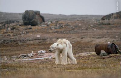 Wildlife Photographer presenta su fotografía ganadora