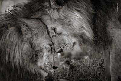 Bond of brothers, por David Lloyd fue la fotografía ganadora.