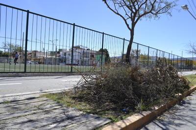 Ramas 'en el olvido'. Los montones de ramas generados por la poda de algunos árboles pueden durar meses a los costados de la Línea Verde. Este fin de semana se pudieron apreciar por lo menos tres montones a lo largo del parque.