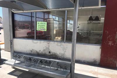 Grafiteados. Parada de autobús en carretera a Mileras y esquina con Paseo del Tecnológico ha sido grafiteada en varias ocasiones y nadie las limpia ni las repara.