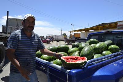 La cosecha y comercialización de la sandía es otro distintivo más del municipio de Matamoros. Ambas frutas se recolectan durante los mismos meses, aunque el melón de La Laguna es el más popular a nivel nacional.