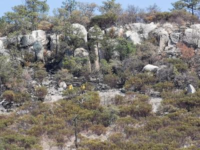 'Apagan' incendio en límites de Durango y Mezquital