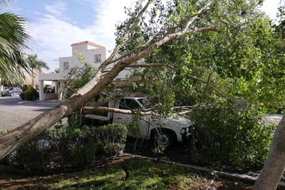 La estación de bomberos recibió 39 notificaciones de caída de árboles en distintos puntos de Torreón.