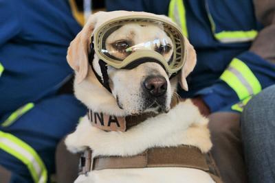 Se jubiló en la Unidad Canina de la Secretaría de Marina Armada de México.
