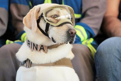 La labrador se convirtió en un símbolo de las acciones de rescate.