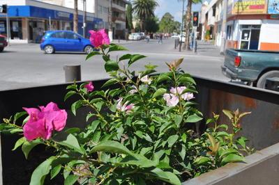 Con basura. Apenas dos macetas cuentan con flores, mientras que el resto se mantienen vacías desde hace meses, por lo que la gente arroja aquí todo tipo de desechos, como si fueran basureros.