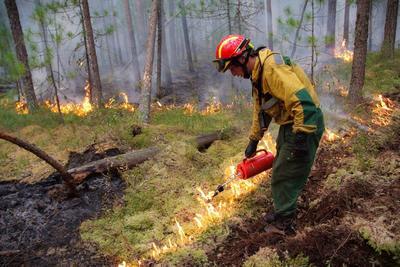 Más de 30,000 kilómetros cuadrados (11,850 millas cuadradas) están en llamas.