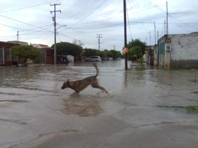 Lluvias causan encharcamientos al suroriente de la ciudad.