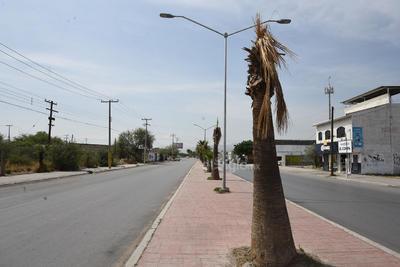 Secas. La vegetación de la vialidad se encuentra en mal estado. Varias de las palmas del lugar se hallan completamente secas.