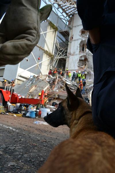 Después de su destacable participación en los rescates de la Ciudad de México, tanto Agatha como Zeus ya son canes retirados del servicio del escuadrón canino.