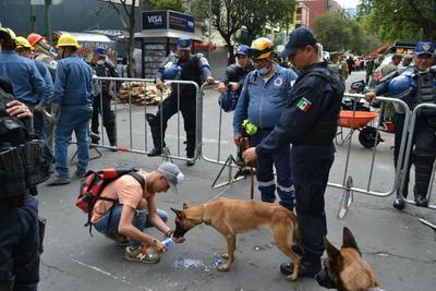Ambos perros disfrutan ahora de una vida más tranquila, mientras que la Dirección de Seguridad Pública en su área de Escuadrón Canino se encuentra entrenando a quienes serán los sucesores.