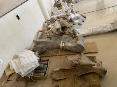Descubren en Tultepec la primera trampa para mamuts en el mundo
