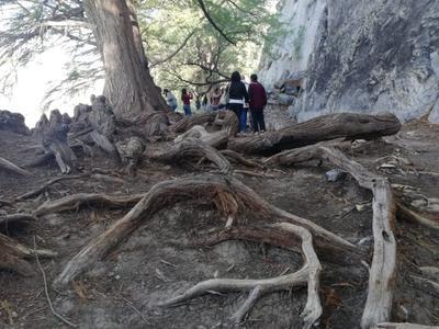 En el Bosque de Galería, los árboles están a un costado de las paredes de los cerros, lo que los protege de las avenidas y llegan a ser más longevos, esto se puede conocer por sus raíces. Hay un árbol de 1,300 años de antigüedad.