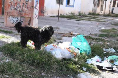Infecciones. Una variedad de animales, sobre todo perros pueden observarse en la zona buscando alimento de la misma basura, con el riesgo que supone para los mismos y las personas que habitan en la zona.