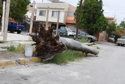 Troncos. Gruesos troncos se encuentran entre las vialidades del sector habitacional ubicado al norponiente de la ciudad.