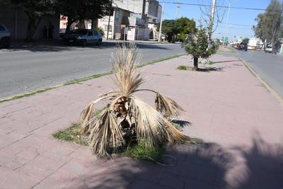 Secas. La vegetación que en su momento no fue talada, no fue regada y es afectada por las condiciones de la región, de forma tal que las plantas ahí ubicadas han muerto como consecuencia.