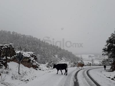 Municipios de Durango reciben el año nuevo con nevadas
