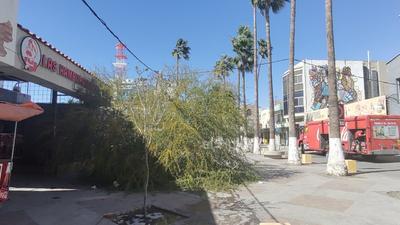 Un árbol cayó en la vialidad.