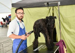 12022020 POSAN PARA LA CáMARA.  Juan Carlos y su perro Benny.