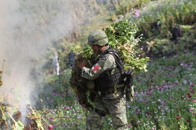 El coronel destacó que este plantío es el más grande detectado que en lo que va de la administración Federal.