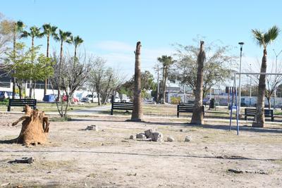 Como adorno quedaron las bases de las palmeras, que fueron mutiladas tras el virus del amarillamiento letal que acabó con su vida.