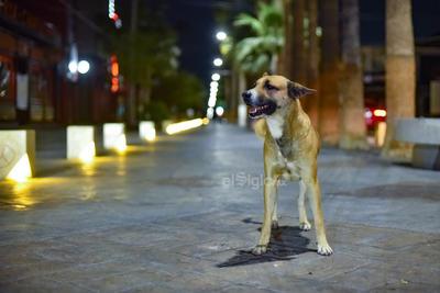 La avenida Morelos, el distrito Colón y los alrededores, se observaron sin visitantes, quienes se resguardaron en sus viviendas para evitar contagios. En la zona se observó paseando una mascota sin su dueño.