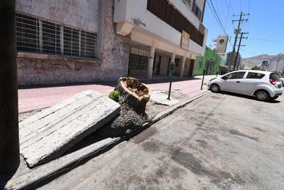 Casi rampas. En la avenida Presidente Carranza algunas banquetas se elevaron debido a raíces de árboles; en ciertos casos las planchas de cemento lucen como auténticas rampas para patinar.