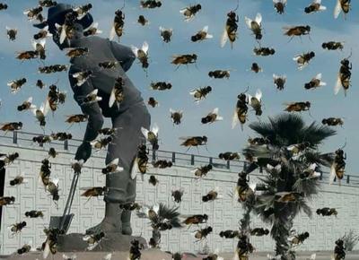 Las moscas y los memes 'invaden' La Laguna