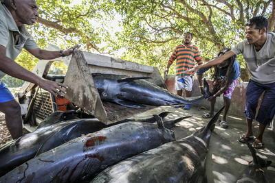 Se debe, sin duda, a la toxicidad del agua, alegó el jueves el oceanógrafo Vassen Kauppaymuthoo, en declaraciones al diario local Le Mauricien.