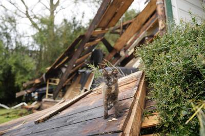 También en declaraciones a CNN, el gobernador de Texas, Greg Abbott, dijo a primera hora de hoy que en su estado, que también se ha visto afectado por el paso de 'Laura', no tenían noticias de fallecidos e indicó que 'sin duda' la masiva evacuación en la zonas costeras había 'salvado vidas'.