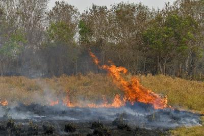 Incendios consumen la Amazonía brasileña